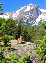 Sprague Lake Squirrel